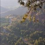 Сиурана