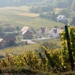Вид с виноградника на Riquewehr