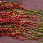 Деревушка цветов и пряничных домиков