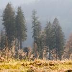 Прогалины Черного леса