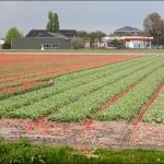 Голландия 2010