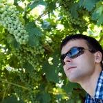 Виноградники FRATELLI VOGADORI