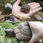 Впервые встретила черепах в живой природе