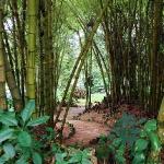 Рио-де-Жанейро, ботанический сад